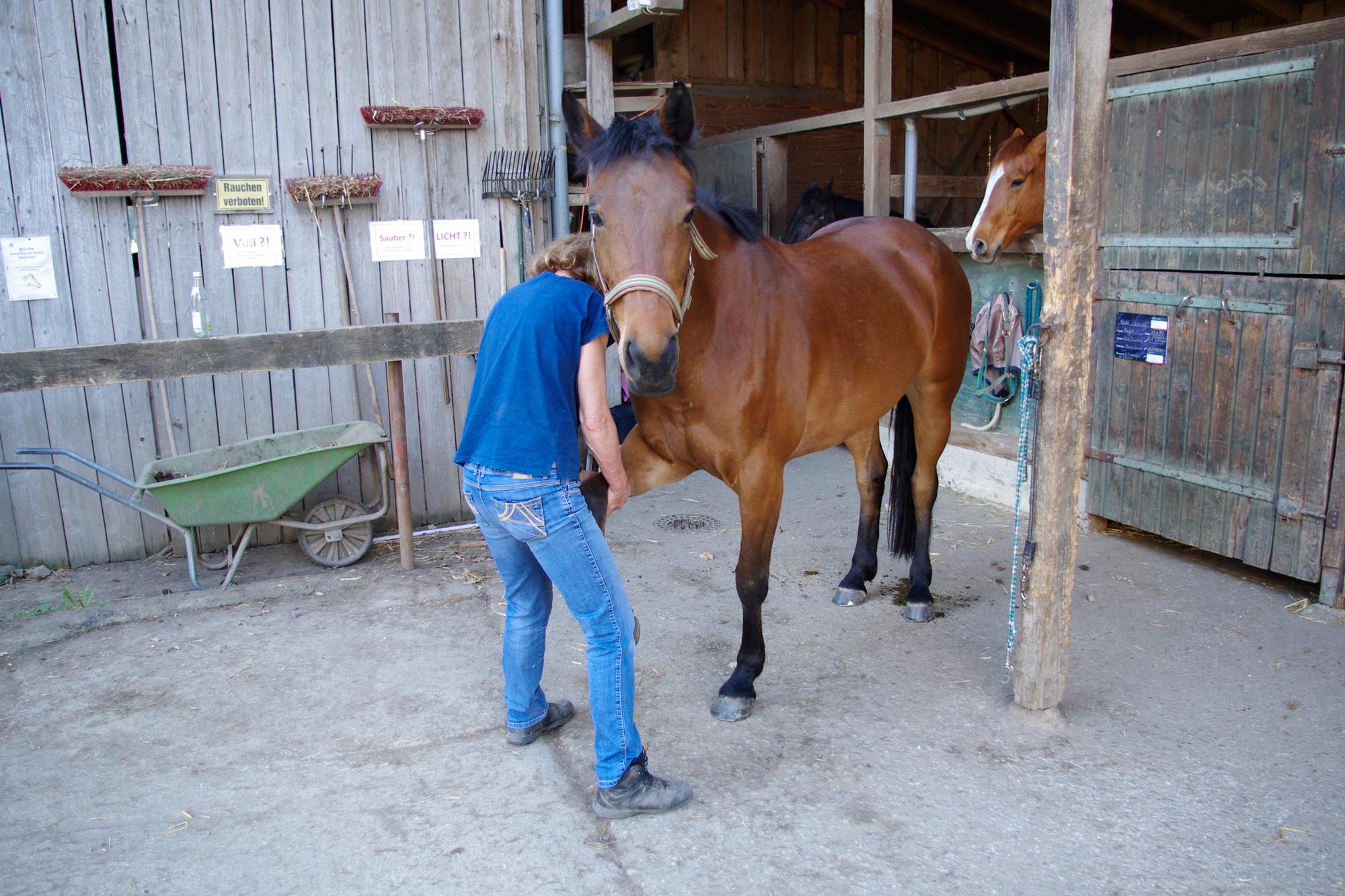Erstes kennenlernen pferd